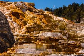 Peg - Mammoth Hot Springs