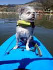 Pro Dog Boarder