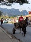 Common mode of transportation in Vinales