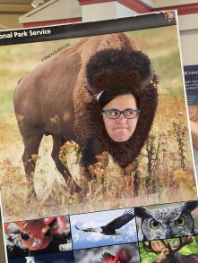 Don't mess with Bison